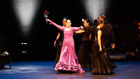 Flamenco de Cristal